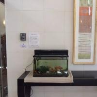 介護施設の新規水槽