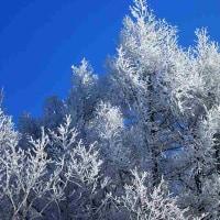 極寒に咲く樹氷