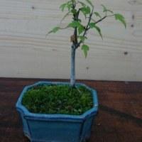 鉢植え 3