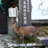 ●明石海峡と淡路みち(鹿の瀬漁場)5