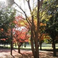 大和市ふれあいの森・泉の森