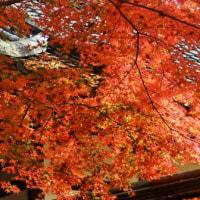 奈良公園・紅葉