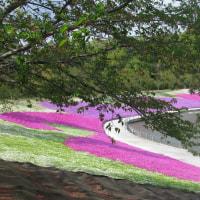 芝桜が最高でしたね!土日なら大変(凄い)混雑した事でしょうね!此処でも観光客一杯。