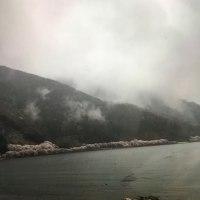 海津大崎の花見に行ってきました