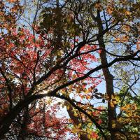 �������ʡ�2015.Autumn