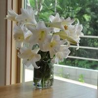 透明な 花器。