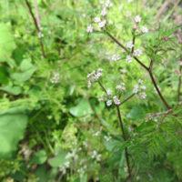 駐車場の小さな花たち -磯子ヴィレッジ-
