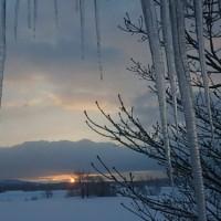タモ並木の雪景色 朝昼夕。
