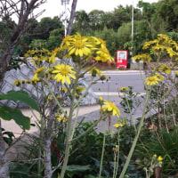 南の島のふるさと便#知名町生活研究グループ連絡協議会