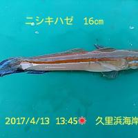 笑転爺の釣行記 4月13日☀ 久里浜海岸