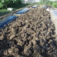 畑の掘り起し。
