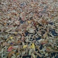 食欲の秋(初冬?)