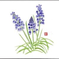 春に咲く ちいさな 青い花たちが 愛らしい、、、