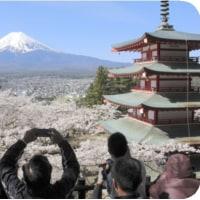 ◯【日本の美】・・・・・富士山・桜・五重塔(新倉山浅間公園・650本のソメイヨシ)
