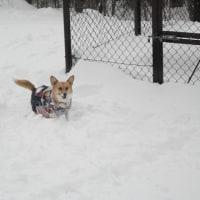 今年初めの雪遊び