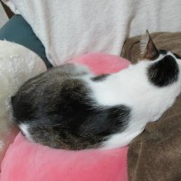 猫と天ぷらの日
