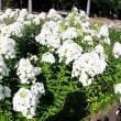 名古屋市農業センターの南瓜、瓢箪、瓜&花色々