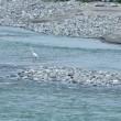 常願寺川の川っぷちに降りて・・・富山市・常願寺川左岸
