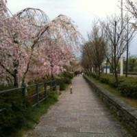 そうだ京都行こう。