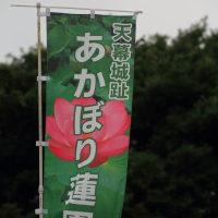 あかぼり蓮園2017