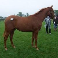 2009年募集馬 社台・サンデー牧場見学ツアー その2