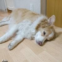 ボクも寝ているんだっス! 静かにしてほしいの~! ボクも・・・。 バディ、寝言じゃーないの?