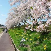 福島県『千本桜』