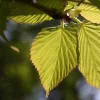 「新緑」は夏の季語