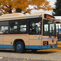 バス停前の大銀杏その後