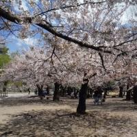 桜   室温データ