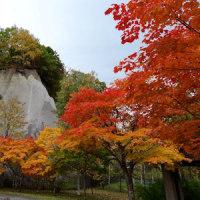 札幌に初雪。最後の紅葉風景を送ります」とのメールが22日朝、入りました。Ken