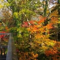 紅葉の湯布院