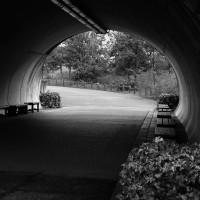 2016年馬見丘陵公園のダリア園・馬見フラワーフェスタ(奈良県北葛城郡河合町佐味田)