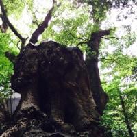 熱海  来宮神社  パワースポット  6/12