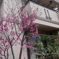 3月29日(水) 晴れ