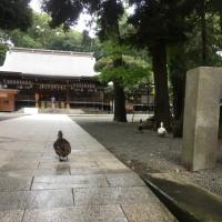 東北ツアー  後日談  平塚八幡宮