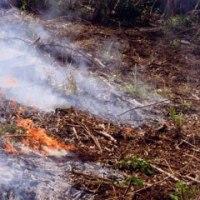 2008年に実施した「小さな焼畑」の記録 [友愛の森/里山再生プロジェクト<8>]