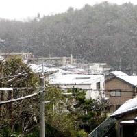 また「雪」か、今年は異常です