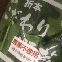日本れん草