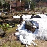 立山山麓もヤット雪が溶け出す