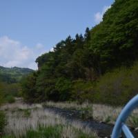 湯川探索で遭遇、水堰でまどろむ