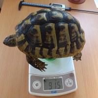 月1回の身体測定(11月)