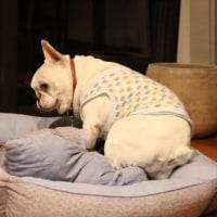 寝床のこだわり。