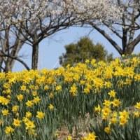 東那須の公園へ写真撮影