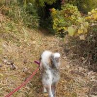 12月4日 雨の降る前に 虎男と山歩き