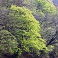 碓氷峠の新緑がこれから美しい