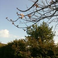 桜が咲きました🌸