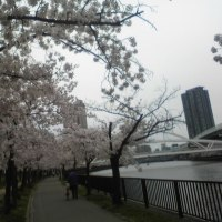 桜の宮公園へ花見に行って来た