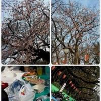 上野の桜と絵画展