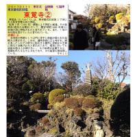 花巡り 「梅-183」 東覚寺②